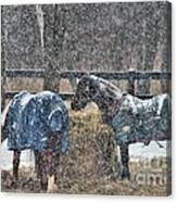 Snow Horses Canvas Print