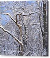 Snow In Connecticut Canvas Print