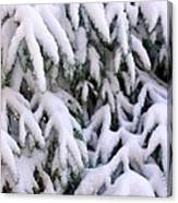Snow Laden Branches Canvas Print