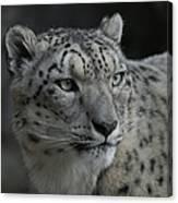 Snow Leopard 15 Canvas Print