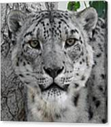 Snow Leopard 5 Canvas Print