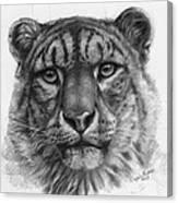 Snow Leopard - Panthera Uncia Portrait Canvas Print