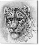 Snow Leopard - Panthera Uncia Canvas Print