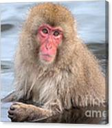 Snow Monkey In The Onsen Canvas Print