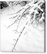Snow On Branch Canvas Print