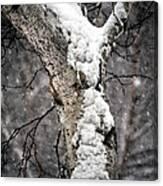 Snow On The Birch Canvas Print