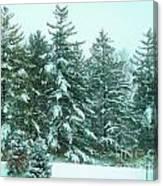 Snow On The Evergreens Canvas Print