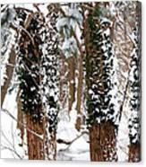 Snow On Tress 2 Canvas Print