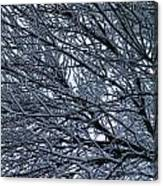 Snow On Twigs Canvas Print