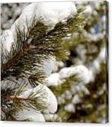 Snow Pine Canvas Print