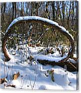 Snow Portal A Fallen Vine Forms An Oval Shape Covered In Snow. Canvas Print