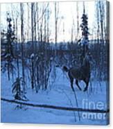 Snow Prancer Canvas Print