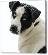 Snow Puppy Canvas Print