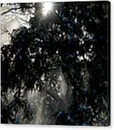 Snow Rays Canvas Print