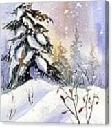 Snow Spruce I Canvas Print