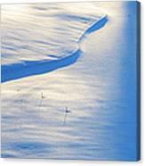 Snow Sunlight And Shadows Canvas Print