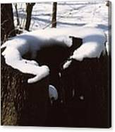 Snow Topping Log Canvas Print