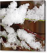 Snow Twig Abstract Canvas Print