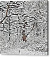 Snow White Forest Canvas Print