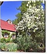Snowball Tree In The Garden Canvas Print