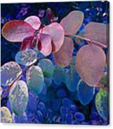 Snowbush Blue Canvas Print
