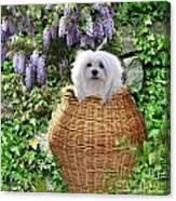 Snowdrop In A Basket Canvas Print