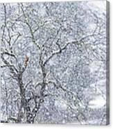Snowfall And Apple Tree Canvas Print