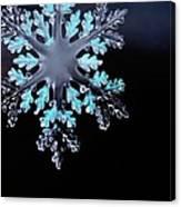 Snowflake In Window 20471 Canvas Print
