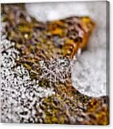 Snowflake On Rust Canvas Print