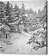 Snowing At The Forest Canvas Print