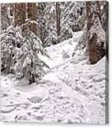 Snowshoe Trail Canvas Print