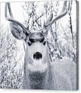 Snowstorm Deer Canvas Print