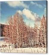 Snowy Aspens  Canvas Print