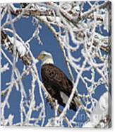 Snowy Bald Eagle Canvas Print