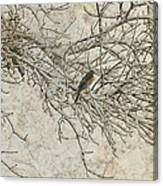 Snowy Bird Canvas Print