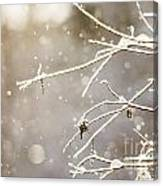 Snowy Branches Canvas Print