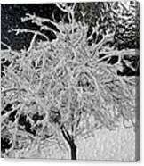 Snowy Branches In Darkness Canvas Print