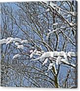 Snowy Branches With Blue Sky Canvas Print