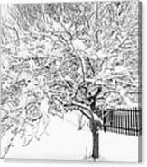 Snowy Crab Apple Canvas Print