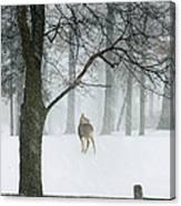 Snowy Deer Canvas Print