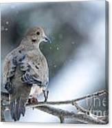 Snowy Dove Canvas Print