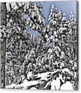 Snowy Dreams  Canvas Print