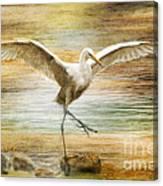 Snowy Egret Dancing  Canvas Print