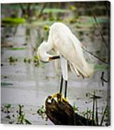 Snowy Egret In Swamp Canvas Print