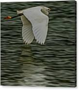 Snowy Egret On Estuary Canvas Print
