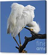 Snowy Egret Photograph Canvas Print