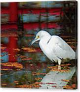 Snowy Egret Stalking His Lunch Canvas Print