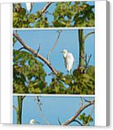 Snowy Egret Triptych Canvas Print