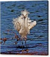 Snowy Egret With Yellow Feet Canvas Print