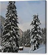 Snowy Fir Trees  Canvas Print